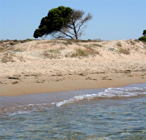 Playa El Pinet Santa Pola